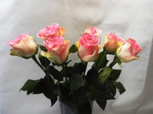 Rose variété Espérance
