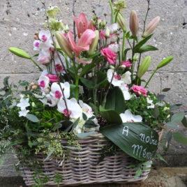 vznnerie-fleurs-plantes